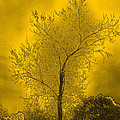 Cottonwood Tree April 2012 In Gold by Joyce Dickens