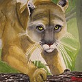 Cougar by Terry Lewey