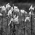 Country Flowers by Rick Rauzi