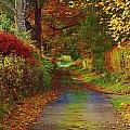 Country Lane by Gavin Macrae