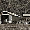 Country Life Sepia by Steve Harrington
