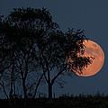 Country Moon  by Betsy Knapp