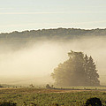 Country Morning by Elaine Mikkelstrup