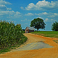 Country Road by Hannah Pickens