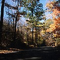 Country Road In Autumn by Kay Novy