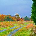 Country Road by Scott Hervieux