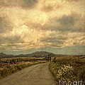 Country Road With Wildflowers by Jill Battaglia