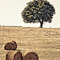 Countryside In Summer by Photography taken by Mario Gutiérrez.
