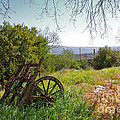 Countryside Wagon by Carlos Caetano