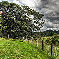Countryside With Old Fig Tree by Kaye Menner