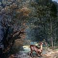 Courbet: Hunted Deer, 1866 by Granger