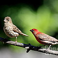 Courtship In Nature . 40d8073 by Wingsdomain Art and Photography