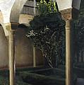 Courtyard Garden by Rohan Lowe