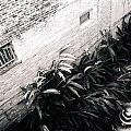 Courtyard Royal Street New Orleans by Doug Duffey