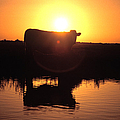 Cow At Sundown by Picture Partners and Photo Researchers