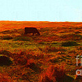 Cow Grazing In The Hills by Wingsdomain Art and Photography