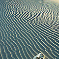 Cow Skull In Dunes by Garry Gay