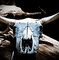 Cow Skull In Shade by Sonja Quintero