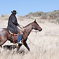 Cowboy On Horseback by Cindy Singleton
