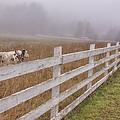 Cows And Fog by Tom Singleton