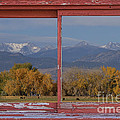 Cows Life Colorado Autumn Rocky Mountains Picture Window Art by James BO  Insogna