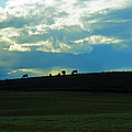 Cows On The Hill by Randy Harris