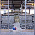 Cowshed Interior by Jaak Nilson