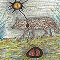 Coyote Spirituality by Carolyn L Schaefer