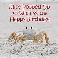Crab Happy Birthday by Judy Hall-Folde