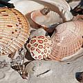 Crab Shell by Christine Stonebridge