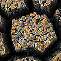 Cracked, Dried Out Mud, Mokolodi Nature by Vincent Grafhorst