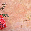 Cracked Wall And Rose by Tom and Pat Cory