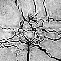 Cracks by Gerard Hermand