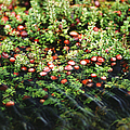 Cranberry Bog by Science Source