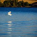 Crane In Flight by La Rae  Roberts