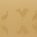 Crane In Mist by Zhouyousifang