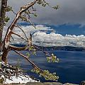 Crater Lake Pine by Greg Nyquist
