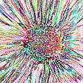 Crazy Daisy Colored Pencil Photoart by Debbie Portwood