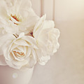 Cream Roses In Vase by Photo - Lyn Randle