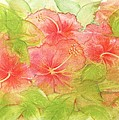 Creamsicle Hibiscus by Carla Parris