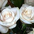 Creamy Roses I by Alys Caviness-Gober