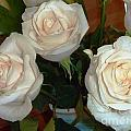 Creamy Roses II by Alys Caviness-Gober