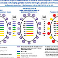 Creation Of H3n2 Influenza Virus by Science Source