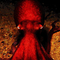 Creatures Of The Deep - The Octopus - V4 - Red by Wingsdomain Art and Photography