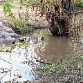 Creek Bed 1 by Tammy Herrin