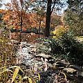 Creek by Denise Ellis
