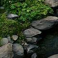 Creek Flow Panel 2 by Peter Piatt