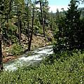 Creek Glen Alpine Creek by LeeAnn McLaneGoetz McLaneGoetzStudioLLCcom
