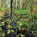 Creek In The Rain Forest by Adam Jewell