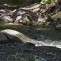 Creek by Robert Gross